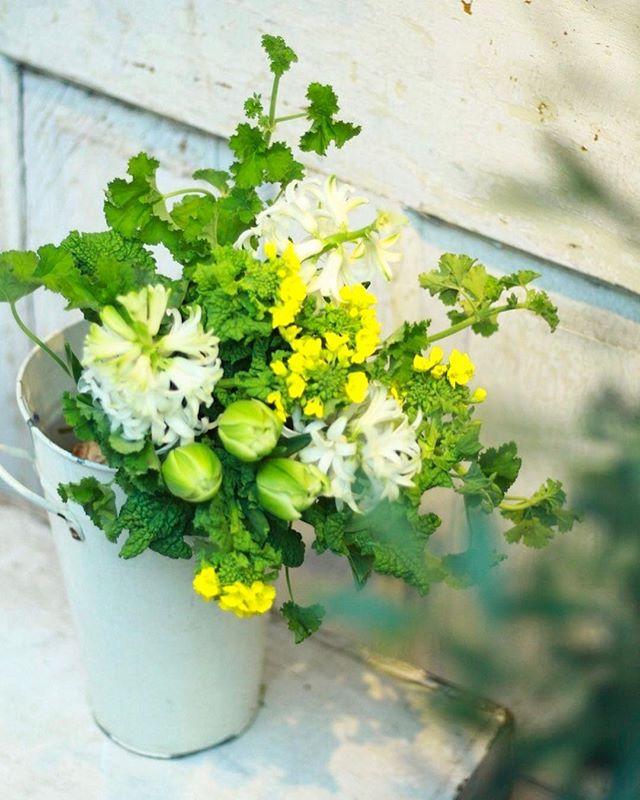 「ヒヤシンスと菜の花のブーケ」..今週から新しいレッスンが始まります。香りの良いヒヤシンスとこちらも春を象徴する花、菜の花を使って束ねるキュッと明るいブーケ。チューリップや可愛い葉っぱも入れつつ皆さんがどんな風に仕上げてくださるか今からワクワクしています。ご予約は店頭、メール、お電話にて、三日前まで受け付けております。お気軽にご参加ください。..2/19(Tue.) 11:00- / 18:30-2/21(Thu.) 11:00- 2/23(Sat.) 11:00- / 16:30-2/26(Tue.) 11:00- / 18:30-2/28(Thu.) 11:00- ..#flowerlesson #球根 #菜の花 #bouquet #警固 #fukuoka #natural #yellow