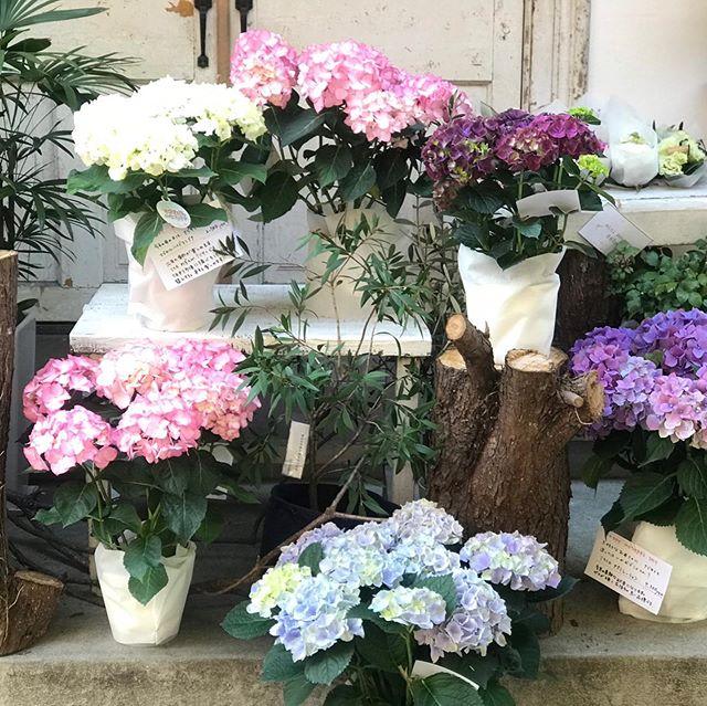 沢山の母の日のご注文ありがとうございました皆さまのお気持ちを込めながら丁寧に制作してまいります。店頭には可愛い鉢物やアレンジメントなどご用意しておりますので、是非お越しください。爽やかな風が吹くけやき通りでおまちしております。#flower #fukuoka #cerise#degas#けやき通り