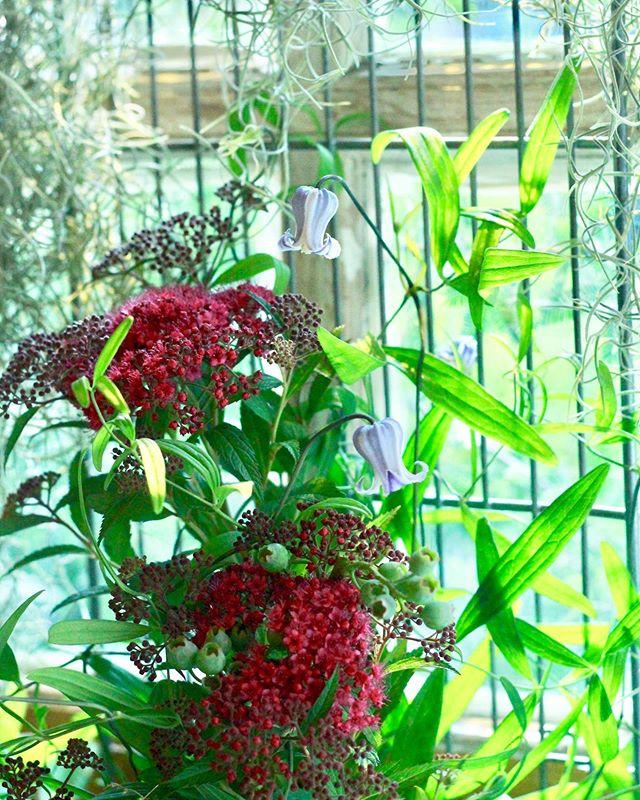 7月のレッスン「窓」.今月のテーマは窓です。暑くなるとお花が死んでしまうのが悲しい、という声をよく聞くので、エアプランツを使った育てるリースと、季節問わずお花で遊べそうなレッスンを考えてみました。特にフェンスの方は「一体何のことですか?」とご質問が多いのですが、窓枠にフェンスを立てかけて、下に置いた花器からクレマチスやジャスミンなどのつる植物を這わせたり飛ばしたりしようかなと計画しています。早速明日、フェンスのレッスンです。どうなるのだか大変楽しみです!フェンスを丸めたりしても良さそうですし、生け花みたいで面白くなりそう。他にもやってみたいことなどあればお問い合わせお待ちしております!..「エアプランツのリース」7/2(Tue.)11:00-7/4(Thu.)11:00-7/6(Sat.)14:00-7/9(Tue.)11:00-7/11(Thu.)11:00-7/13(Sat.)14:00- 「蔦と花のフェンス」.7/16(Tue.)11:00-7/18(Thu.)11:00-7/20(Sat.)14:00-7/23(Tue.)11:00-7/25(Thu.)11:00-7/27(Sat.)14:00-7/30(Tue.)11:00-.各3,500-5000yen(見本は4,000yen).Cerise〒810-0023福岡県福岡市中央区警固2−18−5Tel/fax 092-733-6373Mail cerise.flower@gmail.com.#cerise #barrosarosa #クレマチス #エアプランツ #リース #flowerlesson #natural #antique