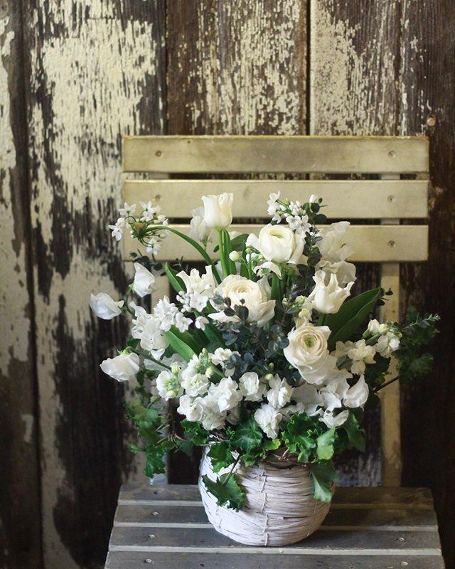 2.6(木)「白」のアレンジメント..オープンのお祝いにご自分でお花を作られたい、とレッスンご参加くださった生徒さん。ラナンキュラスやスイートピーなど春の花満載で、とても素敵に仕上がりましたね。切り分けなどがとても上手な方で素材を余さずバランスよく生けてくださいました。写真館的なところだとのことなのでとても映えそうです。喜んでいただけます様に。ありがとうございました。次回は花器を持ち寄られるとのこと。水盆!とても面白そうです。楽しみにしています。..#cerise #flowerlesson #フラワーレッスン #オープン祝い #アレンジメント