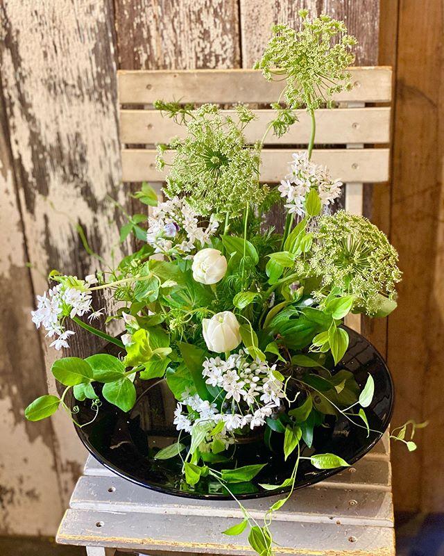 2月のレッスンまとめ あっという間に2月も終わってしまいました。陽の照る日には春が近づいているなと感じますね。 2月は白がテーマでしたがミモザの時期でもあったのでご要望伺いながらのレッスンでした。ご自宅から水盆を持ってきてくださって剣山に生けたり、花器を組み合わせたり。お誕生日にご自分で作られて送られる生徒さんも。スワッグや花束、アレンジメント。皆さんのお好みもそれぞれで、2月も大変楽しかったです。皆様ありがとうございました。 #cerise #警固 #flowerlesson #barrosarosa